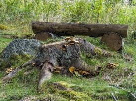 Wildschweinpfad